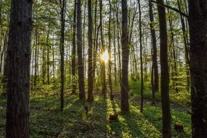 Zumbihl Florence Wald-Lichtung