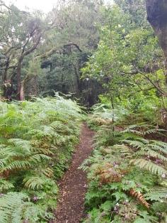 Wanderung durch den mystischen Regenwald Garajonay (C) Florence Zumbihl