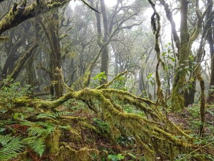 Nationalpark Garajonay (C) Florence Zumbihl