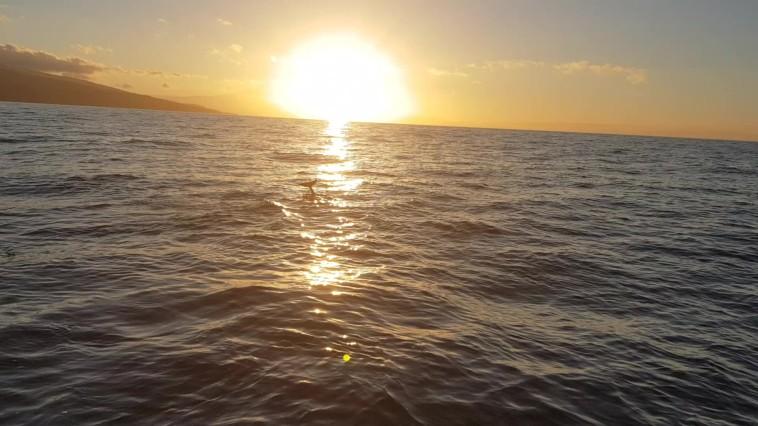 Delfine im Sonnenaufgang (C) Florence Zumbihl